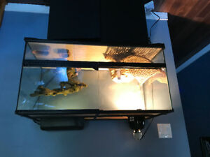 Large Terrarium- comes with everything you need for a lizard.