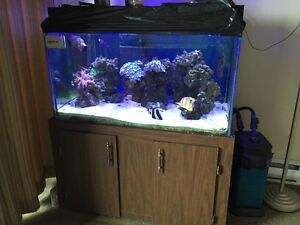 65 Gal. Salt Water Aquarium complete with everything and more!!!