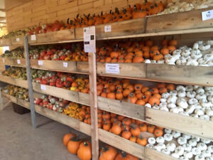 Mini Pumpkins, Gourds, and More