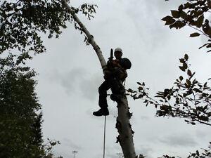 Service d'arbres: Pour tous vos travaux arboricoles Saguenay Saguenay-Lac-Saint-Jean image 6