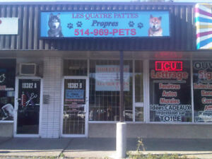 PROFESSIONAL DOG AND CAT GROOMING - 27% DISCOUNT