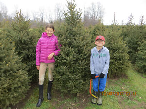 CUT YOUR OWN CHRISTMAS TREE London Ontario image 4