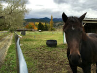 South Thompson Farm Sitting Vacation