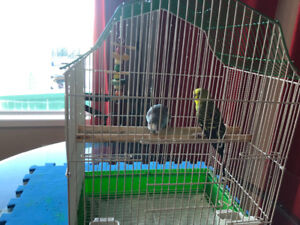 2 budgies for $70 with almost brand new cage.