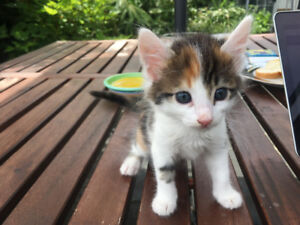 Beautiful Kittens for Loving homes