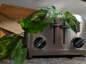 Plant in its modern toaster planter