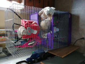 2 ferrets for sale