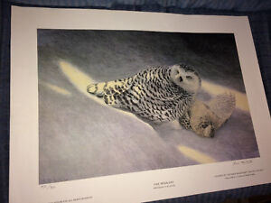 Owl picture limited edition signed print by Steve McNorton West Island Greater Montréal image 1