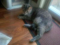 2 yr old spayed w/ shots female cat - FREE to a good home