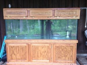 Large 135 Gallon aquarium with solid oak stand