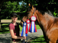 Beautiful 7 Year Old 15hh Sport Pony Mare for Sale
