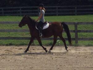 Quiet Trail Horse