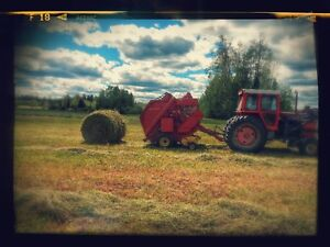Excess Cattle Ranch Hay for Sale Prince George British Columbia image 1
