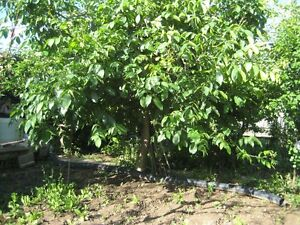 Numerous Fruit Plants-Orchard?Farm?Land? New Subdivision?