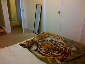 Downtown Room With Ocean View, No Lease Required!