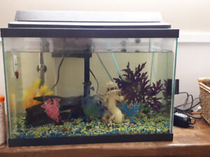 Fish tank supplies and fish