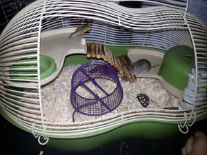 Looking for a hamster cage