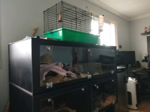 Red tail boa and PVC enclosure for sale