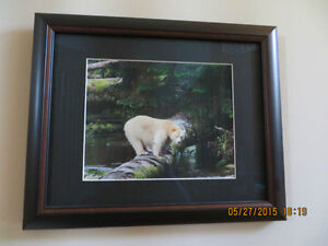 Framed Spirit Bear Photographs