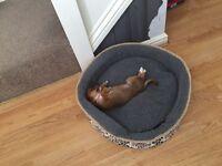 1 pup needs new home (URGENT)