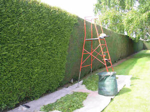 Taille de haie / Hedge cutting