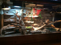 HUGE!!! custom reptile enclosure ,one of a kind .reduced to 300$