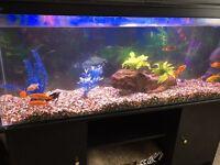 Fish tank 4ft