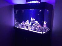 Aqua one full marine set up