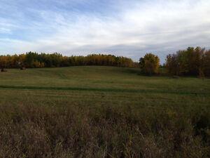 Wildlife, Grain quarter, NE of Norquay - Forest fringe, Regina Regina Area image 2