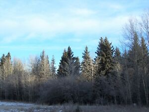 Scenic Treed Land in a Great Location! (Evansburg)