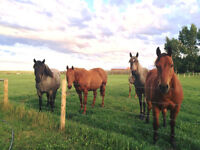 Strathmore Equine Facility (Horse Boarding)