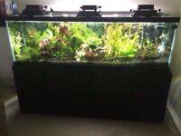 140 gallon aquarium