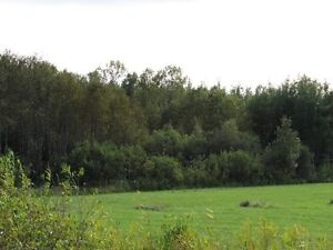 80 acres great for hunting/farming!