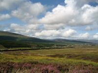 Grouse Beaters wanted for Sporting Estate south of Aviemore, 16th Aug-17th Sept