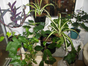 House Plants from $2 ea.