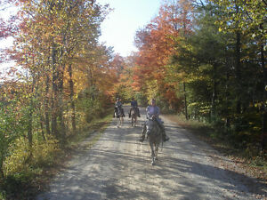 Wonderful Boarding for Trail Riders or Retirees Stratford Kitchener Area image 4
