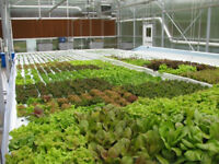 Work On Mountain View Farm. Greenhouse / Food Production