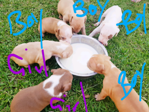 6 puppies for sale
