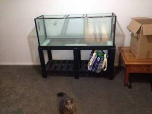 Large fish tank + Filter + Accessories Narangba Caboolture Area Preview