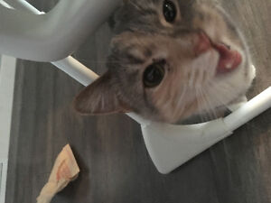 Cat for free - Already spayed