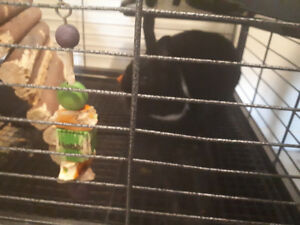Cage and a bunny rabbit and bedding and food for $70.00