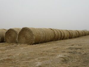Round Canary Straw Bales for Sale