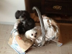 Vacation & Day Care for your small dog