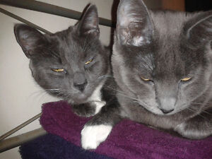 URGENT Need new Home for 2 cats