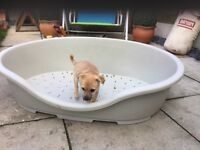 XXXL DOG BED. £20
