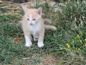 Farm Kittens to give away
