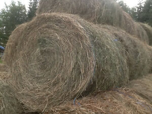 Round bails of hay 5x4 Prince George British Columbia image 1