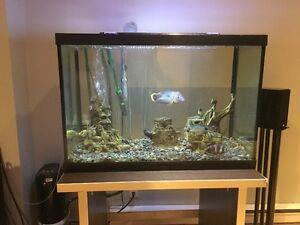 Aquarium Fluval 35 gallons tout equipe   Fish Tank 35 gal