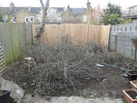 LOVE YOUR GARDEN. For all your garden needs.