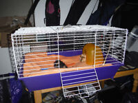 Guinea Pigs, Two Brothers for sale